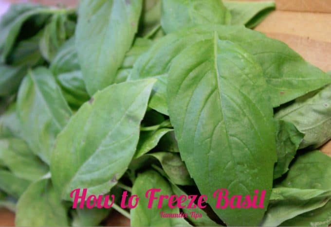 freeze basil 2 copy
