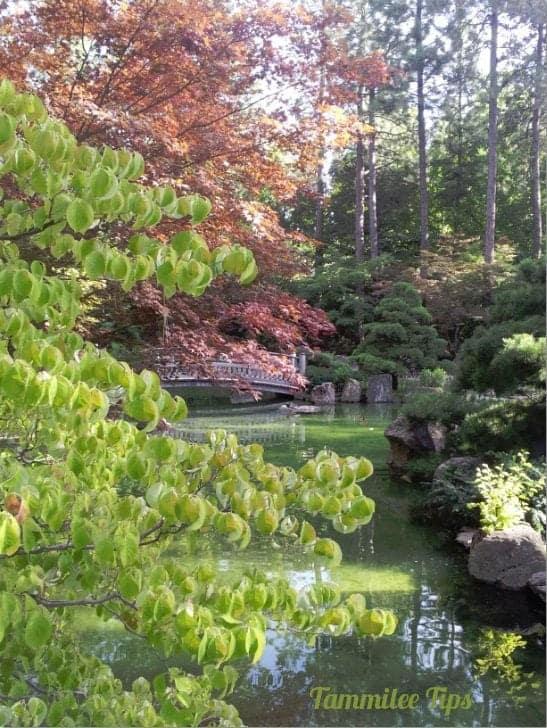 nishinomiya tsutakawa japanese gardens spokane tammilee tips ForNishinomiya Tsutakawa Japanese Garden Koi