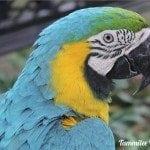 Cartagena Macaw