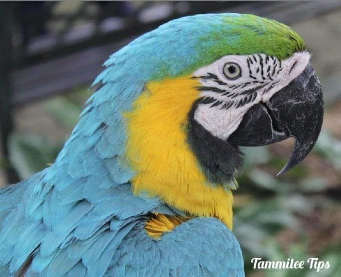 Cartagena Colombia Cruise Ship Terminal, Scarlet Macaws, Juan Valdez Coffee and so much more!