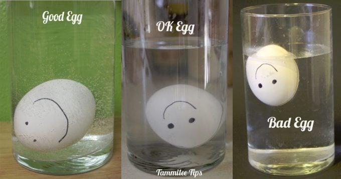 Good ok Bad Egg