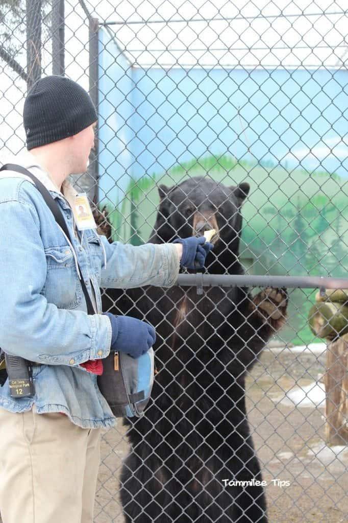 Cat Tales Spokane Oscar the bear dog bone