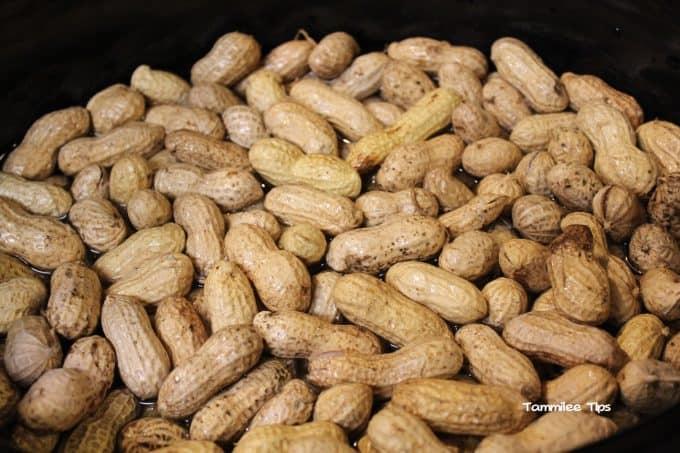 Crock Pot Cajun Boiled Peanuts - Tammilee Tips