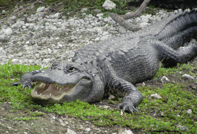 Everglades National Park Anhinga Trail