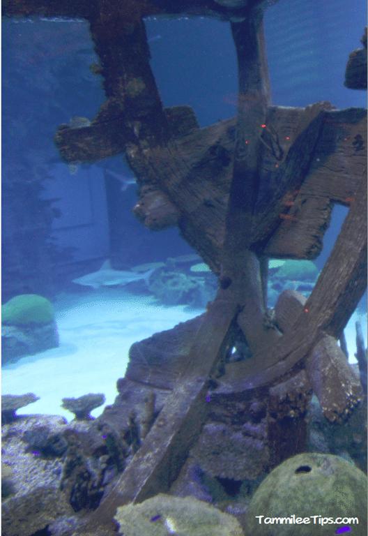 Mandalay-Bay-Shark-Exhibit-Ship-Wreck.png