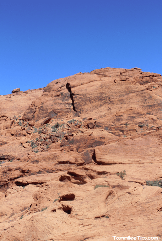 Red-Rock-Canyon-Scenic-Drive-Red-Rocks.png
