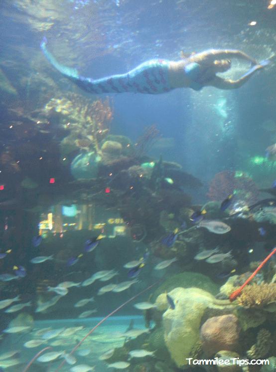 Tanked aquarium at the silverton casino for Mermaid fish tank