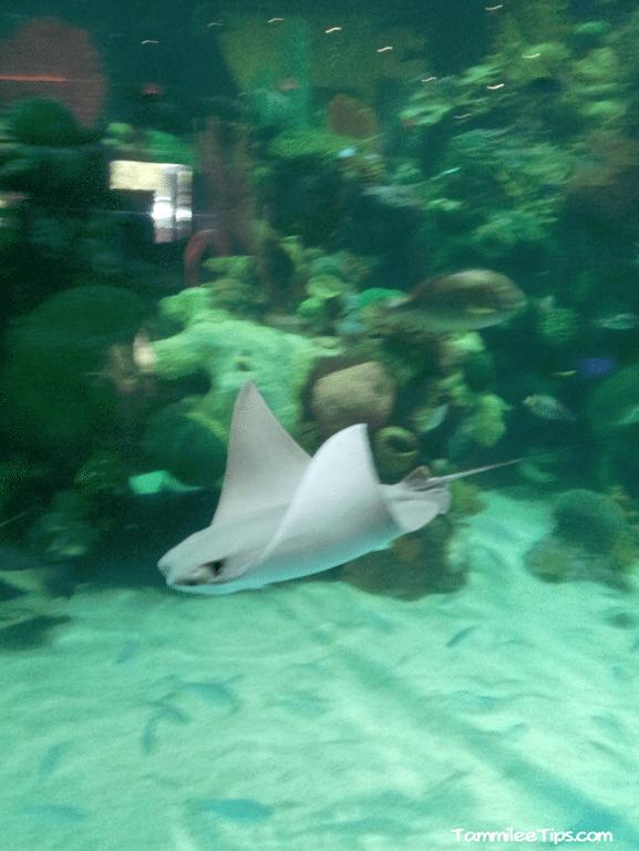 Tanked-Aquarium-Silverton-Casino-Sting-Ray.png