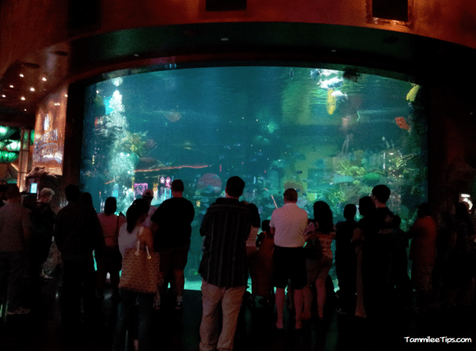 Tanked aquarium at the silverton casino for Atm fish tank