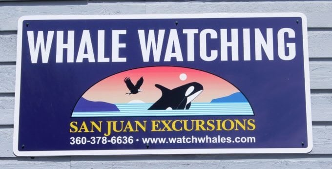 San Juan Excursions Whale Watching