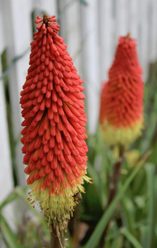 Roche Harbor Flowers