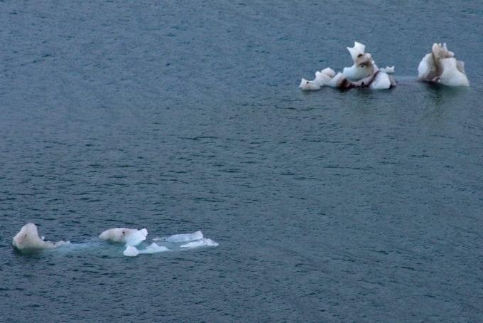 polar-bear-iceberg-2.jpg