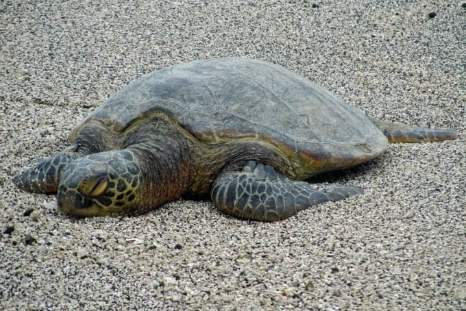 turtle-3.jpg