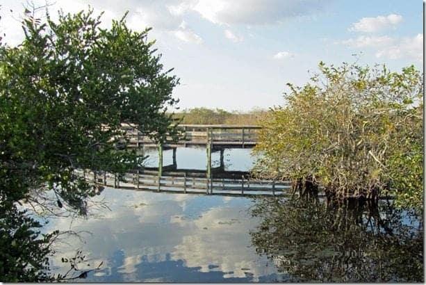 Bird Watching In Everglades National Park