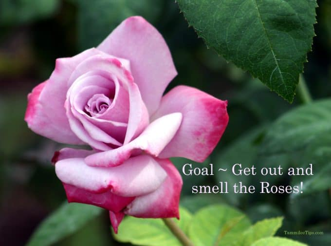 Get out and smell the roses
