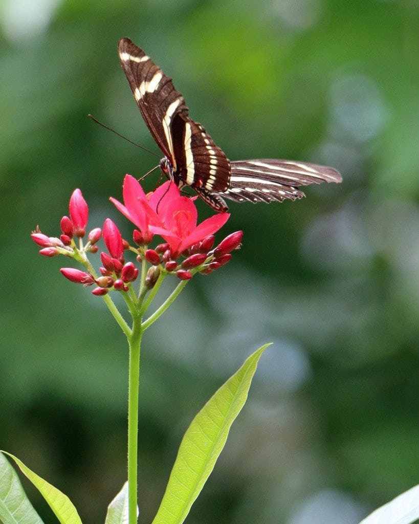 butterfly pic