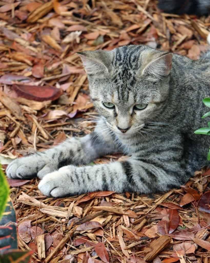 cat in bark