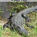 Everglades National Park Travel Tips