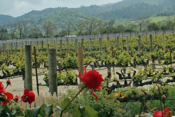Mondavi Winery Napa California