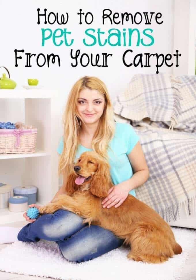 how to remove pet stains from your carpet (4)