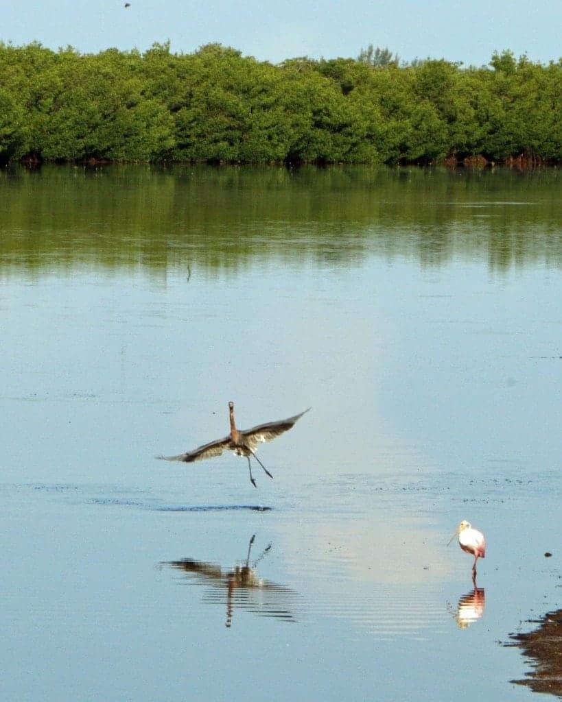 Ding Darling Wildlife Refuge Sanibel Island