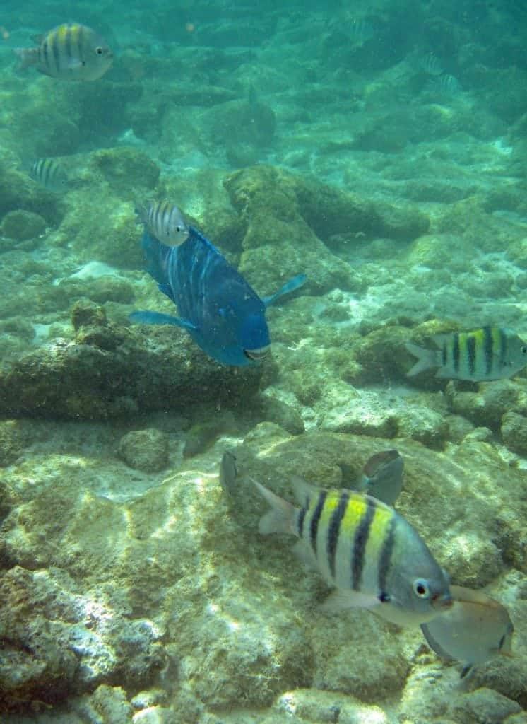Aruba snorkeling on DePalm Island