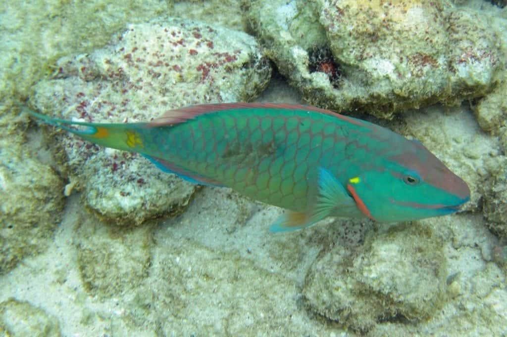 colorful fish snorkeling Aruba