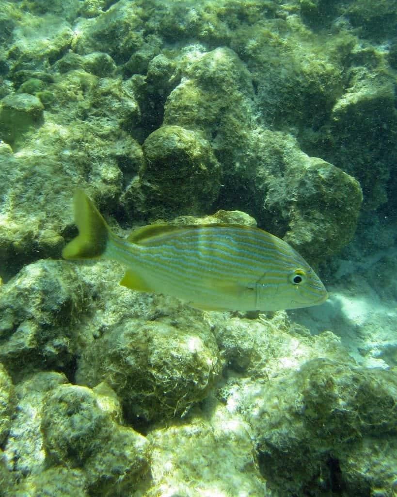 snorkeling in Aruba DePalm Island