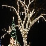 lights in tree at Branson Christmas Light