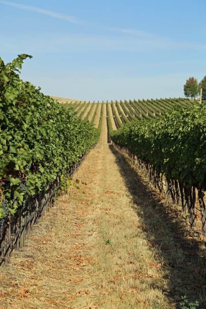 overlooking vineyard at Walla Walla Vinters
