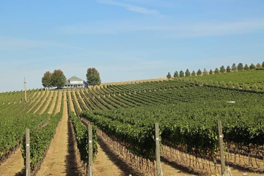 overlooking vineyards at Walla Walla Vinters