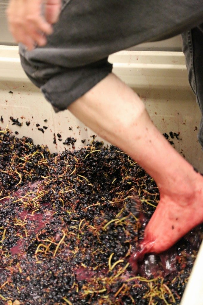 stomping grapes at Sleight of Hand Cellars Walla Walla Washington