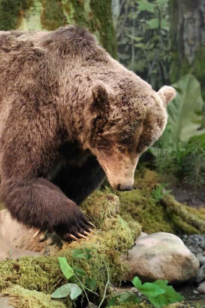 Blog Bear at Royal BC Museum Victoria BC