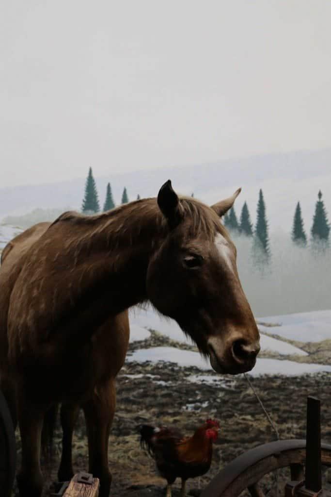 Blog Horse inside Royal BC Museum Victoria BC