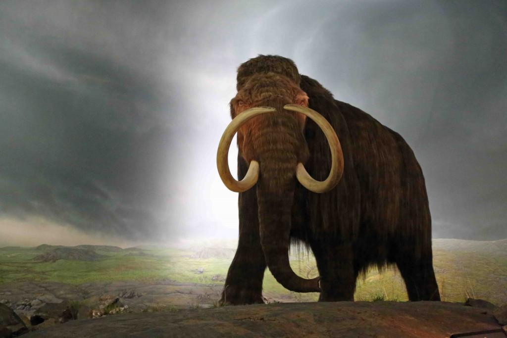 Blog Wolly Mammoth at Royal BC Museum Victoria BC