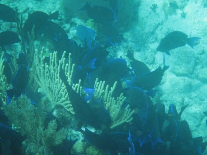 Snorkeling Belize S World Famous Barrier Reef