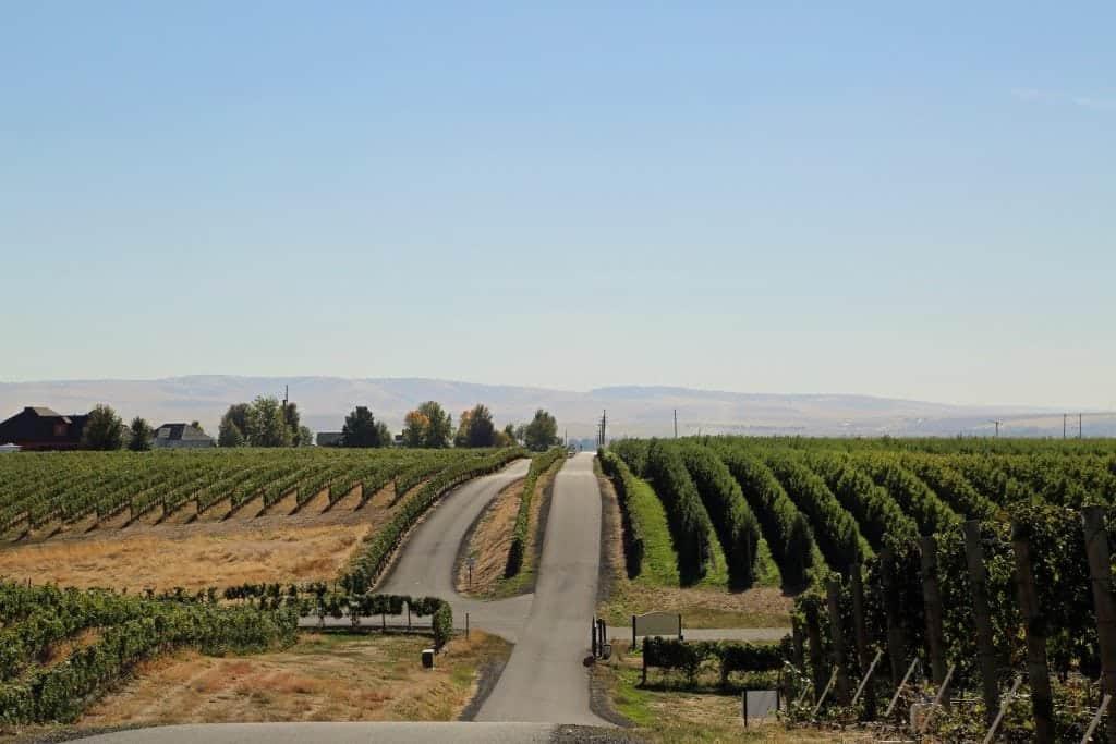 road to PepperBridge Winery Walla Walla Washington