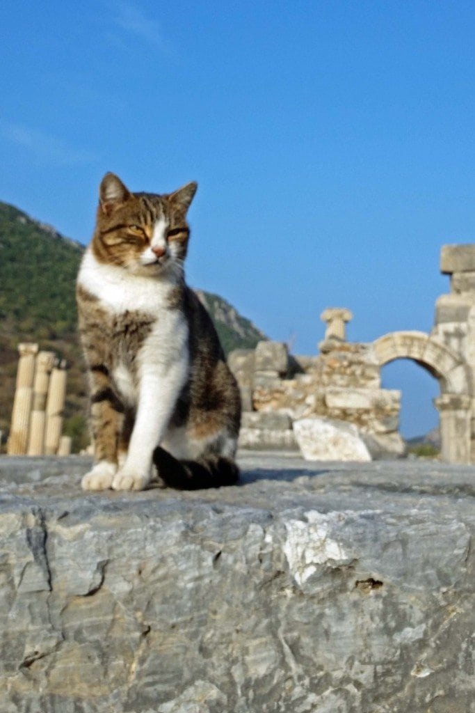 Blog Guardian of Kusadasi