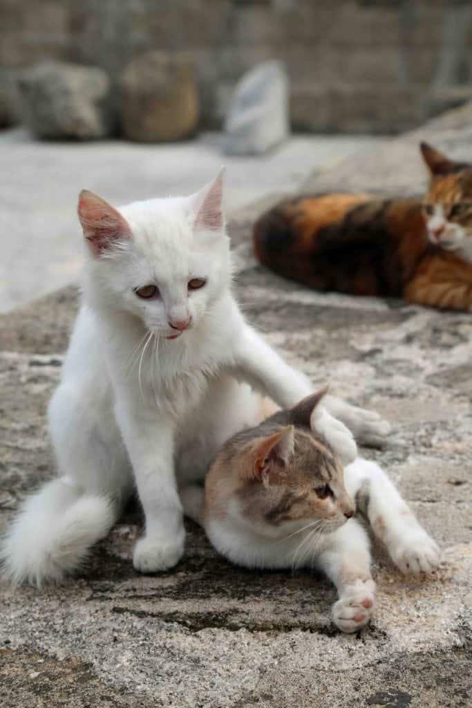 Blog Kittys at play