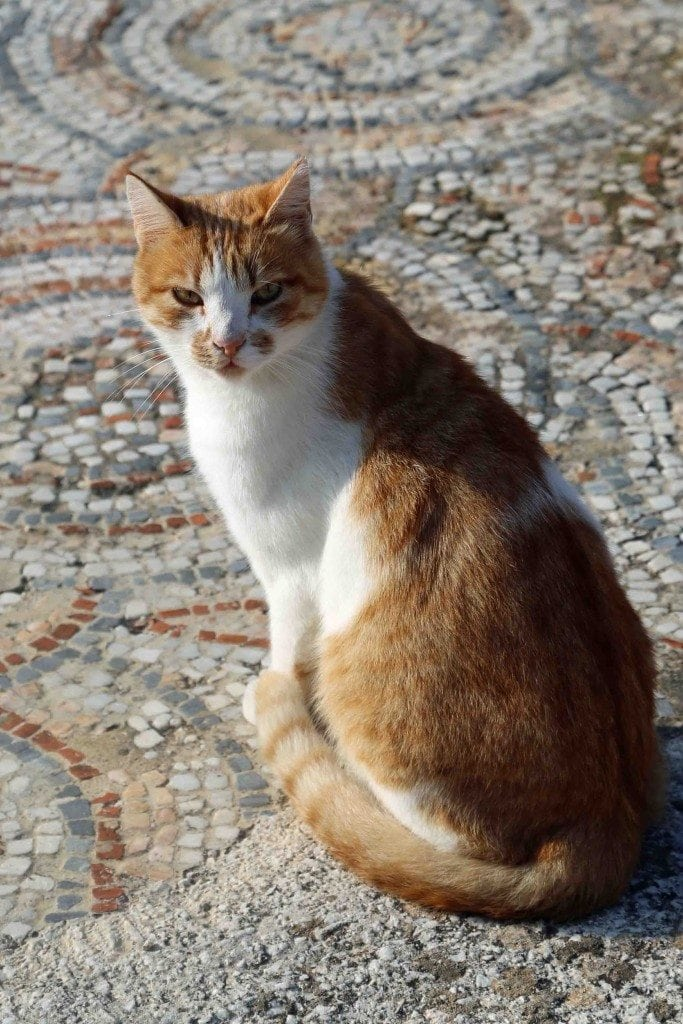 Blog Stare down from Kusadasi kitty