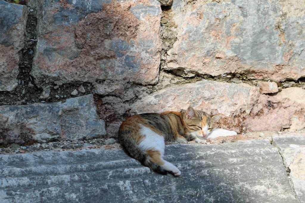 Blog sleepy kitty