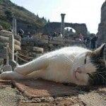 Blog super lazy kitty