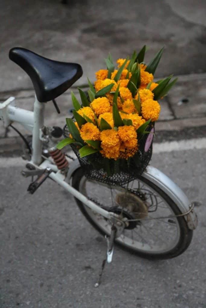 Flowers in Northern Thailand