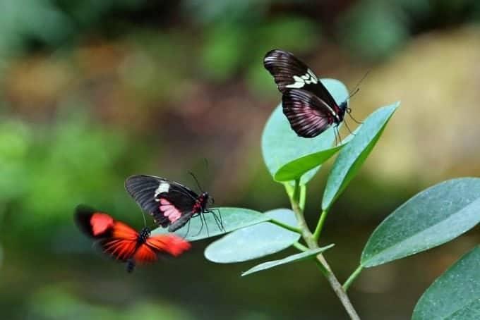 Butterfly Exhibit At Sculpture Garden Park Grand Rapids