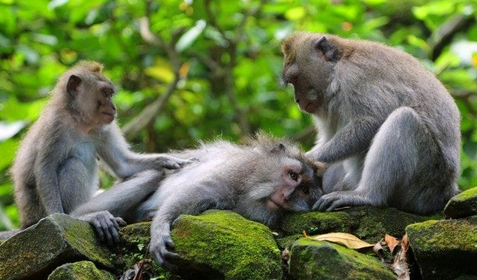 Photos from the Monkey Forest in Ubud, Bali