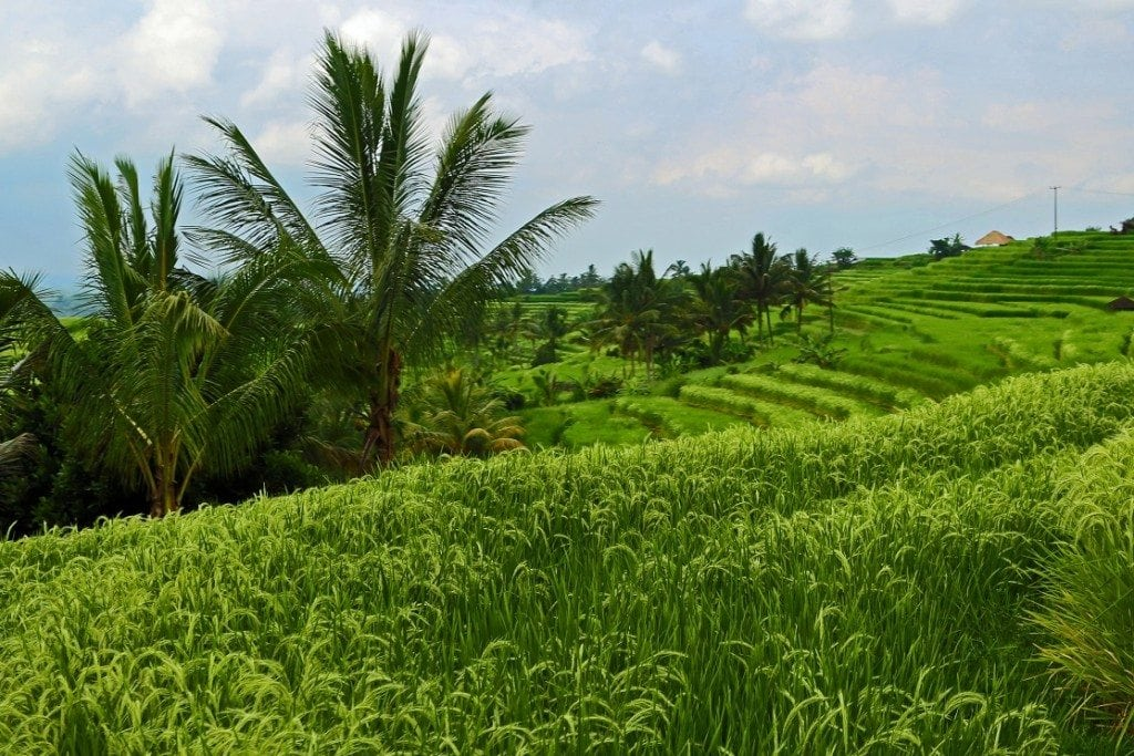 UNESCO World Heritage Rice Terraces in Bali