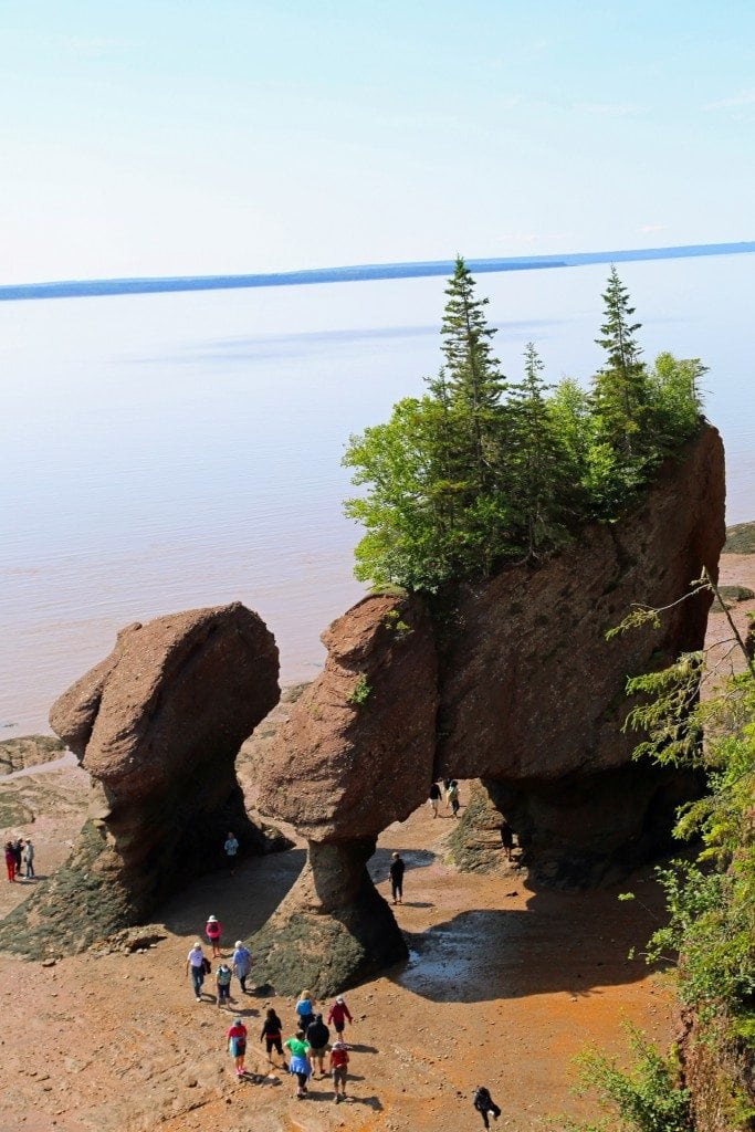 Looking down from the observation deck at Hopewell Rocks