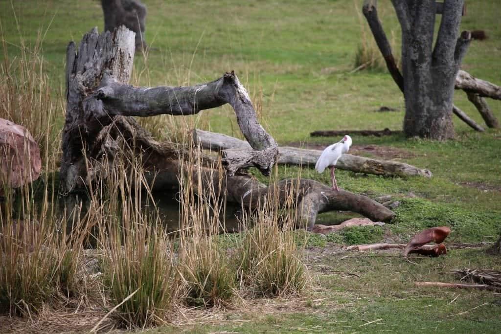 Animal Kingdom Lodge Savannah View Room View 1