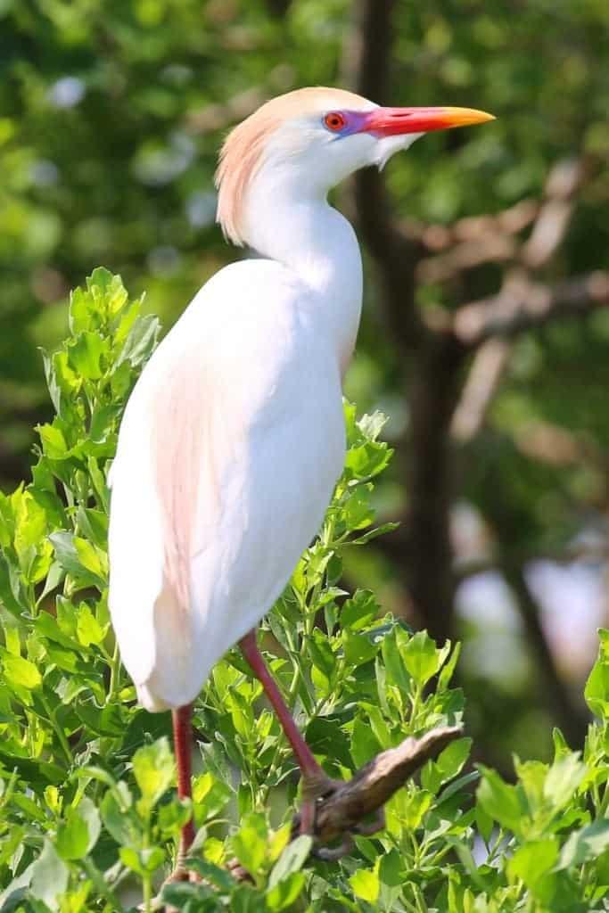 beautiful bird at Grosse Savanne