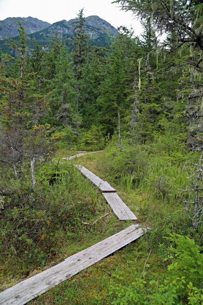 hiking trail in Haines Alaska on excursion